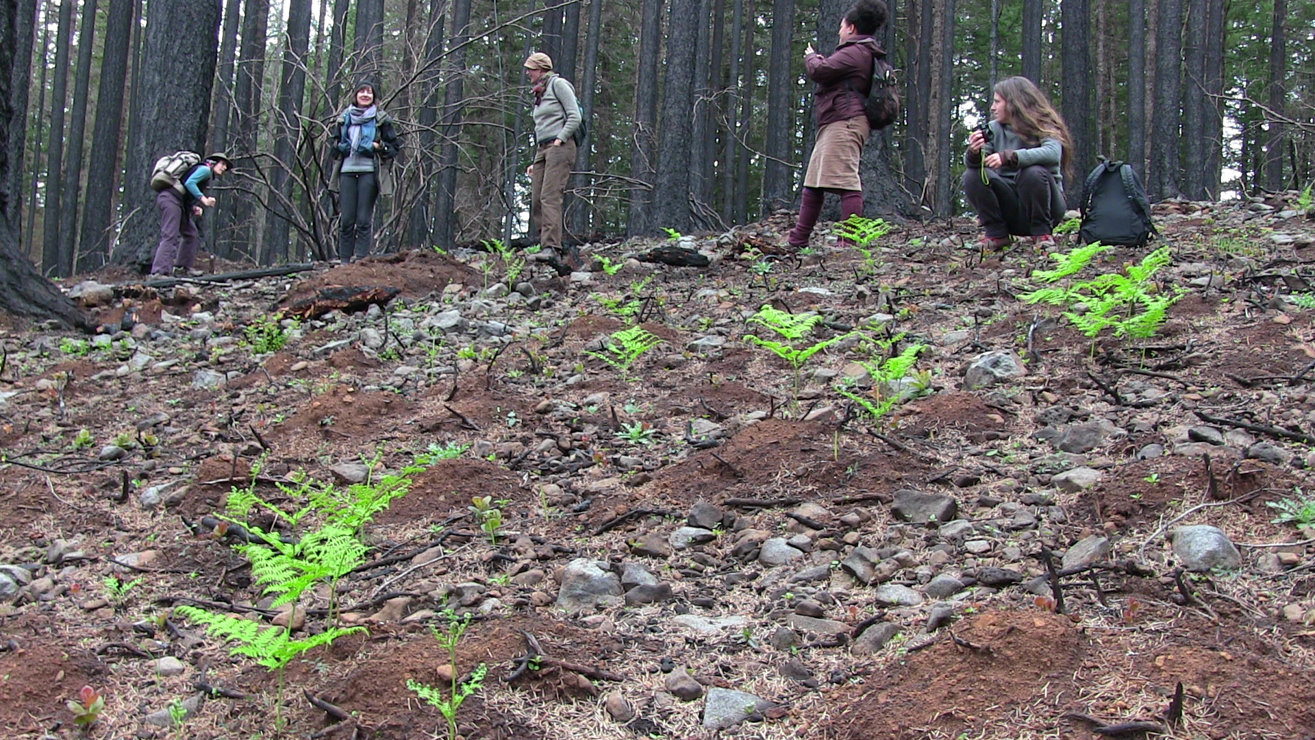 group of volunteers surveying new growth in a previous burn area from the 36 Pit fire in 2014. Foreground shows sprigs of bright new green against the rocky soil.
